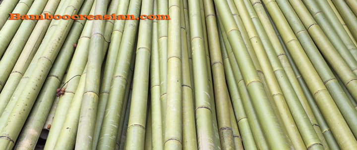 Bamboo pole solid construction poles